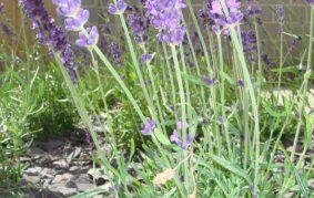 Garden Design img 14